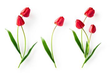 Papiers peints Tulip Red tulip flowers