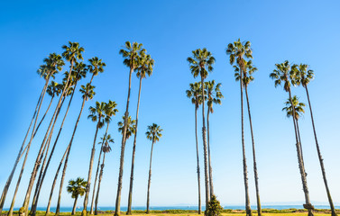 California high palms on the blue sky background