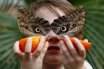 George Lewys poses with Owl butterflies during an event to launch the Sensational Butterflies exhibition at the Natural History Museum in London