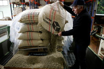 An employee pours raw coffee beans from a bag as he begins the roasting process at a factory that prepares and packages coffee bought by Israeli company, Strauss, in Lod