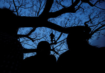 A man (C) is silhouetted as stands on a tree to observe the Seto Machindranath chariot festival in Kathmandu