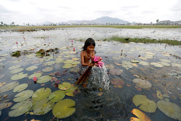 A girl collects water lily flowers at a pond in Kampong Speu province