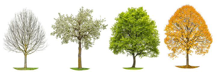 Four seasons nature Tree silhouette isolated