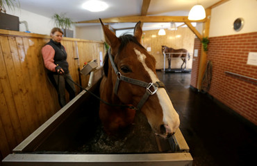 A horse walks on a water belt inside the horse rehabilitation centre in the village of Hrobice