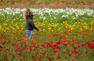 Workers pick flowers on the first day of Spring.