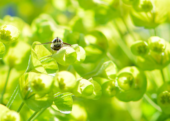 winged insect sitting on a small green bell bloom