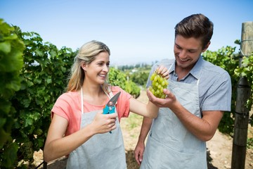 Happy couple holding grapes at vineyard