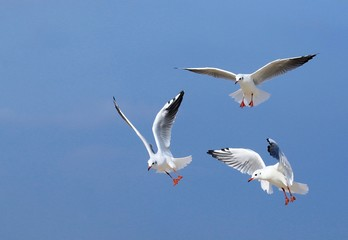 Drei Fliegende Möwen am blauen Himmel