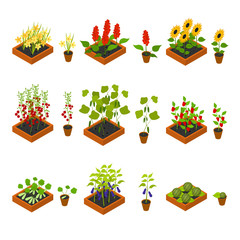 Plant Seedling and Elements Set Isometric View. Vector