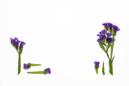 purple limonium flowers isolated on white background