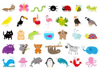 Zoo pet wild animal set. Cute character. Ant, butterfly, spider, ladybug, bee, jaguar, toucan, dog, hippopotamus, elephant, sloth, koala, flamingo, cat, fish, zebra. Flat design. White background.
