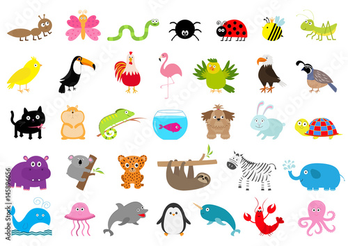 Zoo pet wild animal set. Cute character. Ant, butterfly, spider, ladybug, bee, jaguar, toucan, dog, hippopotamus, elephant, sloth, koala, flamingo, cat, fish, zebra. Flat design. White background.