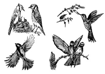 Set of four isolated bird figures,hand drawn sketch vector illustration