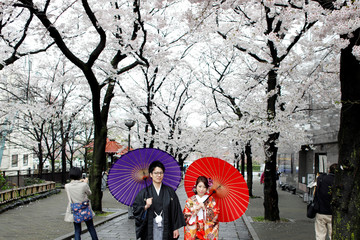 A couple poses for a photo with blooming cherry blossom trees in Kyoto