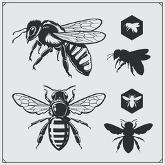 Set of honey emblems and design elements. Honeycombs, bee silhouettes.