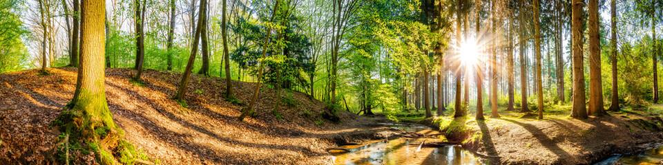 Fototapete - Idyllischer Wald mit Bach und Sonne