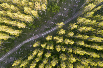 Forest landscape shoot from drone
