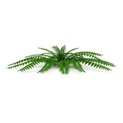 Fern isolated on white. 3D illustration
