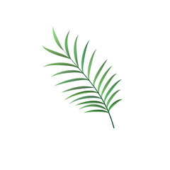 realistic palm leaf vector isolated sign