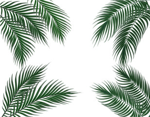 Tropical dark green palm leaves on four sides. Set. Isolated on white background. illustration