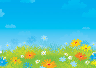 Summer field with flowers