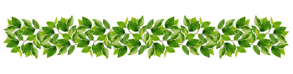 Branches with green leaves in garland