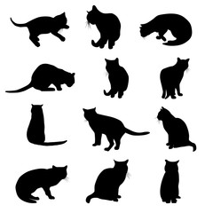 Vector silhouettes of cats isolated on white background