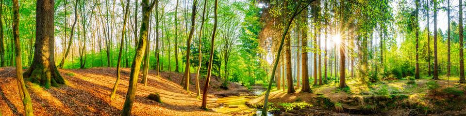 Idyllischer Wald mit Bach und Sonne