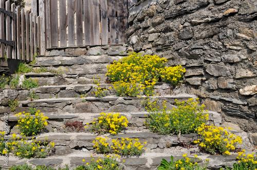 fleurs de rocaille jaune poussant sur les marches en pierre d 39 un escalier photo libre de. Black Bedroom Furniture Sets. Home Design Ideas