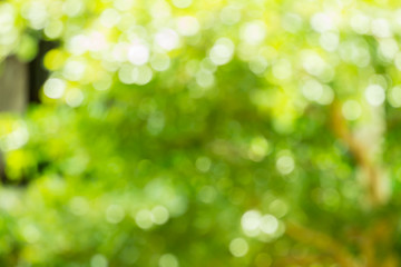 Abstract blurred nature bokeh background in green tone