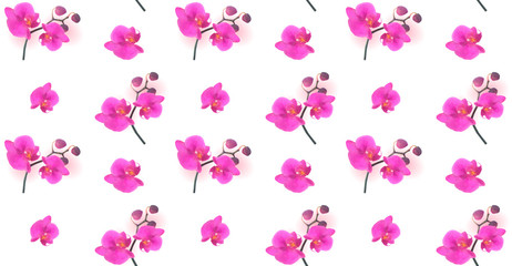 Seamless Pattern Naturalistic Beautiful Colorful Pink Orchid.Vec