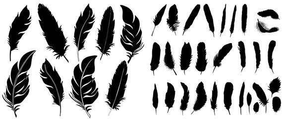 Vector, silhouette of bird feather, collection