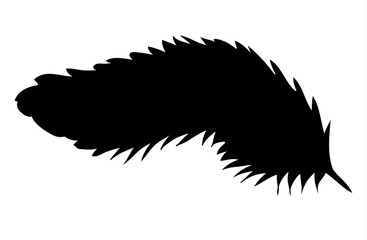 Vector,  silhouette of bird feather, black