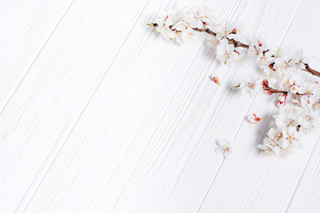 Spring white flowers on vintage wooden background