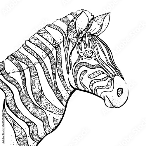 hand drawn ink doodle zebra on white background. design for adults, Birthday invitations