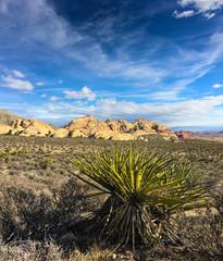 Yucca plant, USA