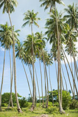 Palm trees and sky, low angle view, Tahiti, South Pacific
