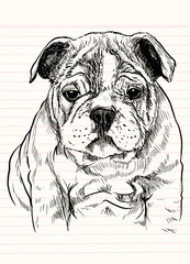 Vector illustration of a hand drawn cute dog,Sketch of Dog by pen