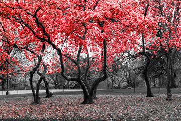 Red flower tree forest in black and white landscape