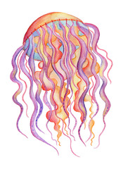 Watercolor jellyfish isolated on white background. Hand drawn illustration