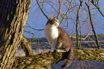 Cat sitting on a mossy tree branch and enjoying sunlight just before sunset.