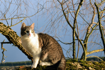 Cat sitting on a tree branch.