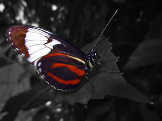 An abstract photo of a beautiful butterfly