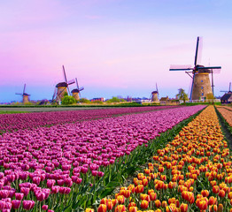 Foto op Plexiglas Purper Magical fairy fascinating landscape with windmills middle tulip field in Kinderdijk, Netherlands, Europe at dawn. (Meditation, anti-stress, Harmony - concept)
