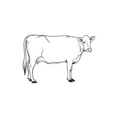 cow line art