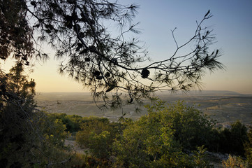 Cedar branch on a background of a View of the valley in evening, Israel