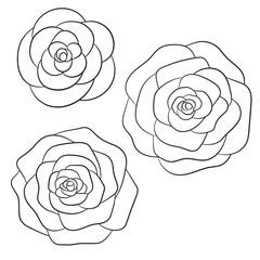 Vector roses black outline on the white background