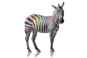 Foto op Canvas Zebra Regenbogen Zebra