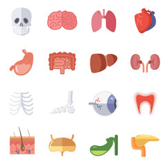 Male and female anatomy. Vector illustration set of human organs