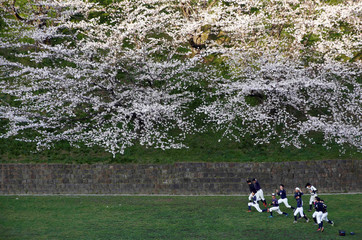 Baseball players work out underneath blooming cherry blossoms in Tokyo